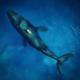 Metapher Denkmuster: Wal und Boot